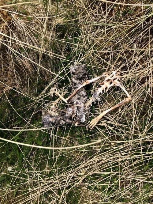Outer Hebrides skeleton